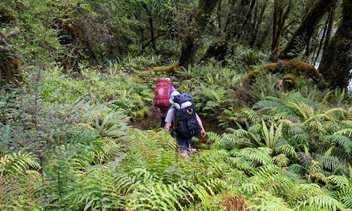 Walking and hiking in Haast UNESCO World Heritage Area